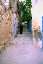 [ Tzfat alleyway and denizen... ]